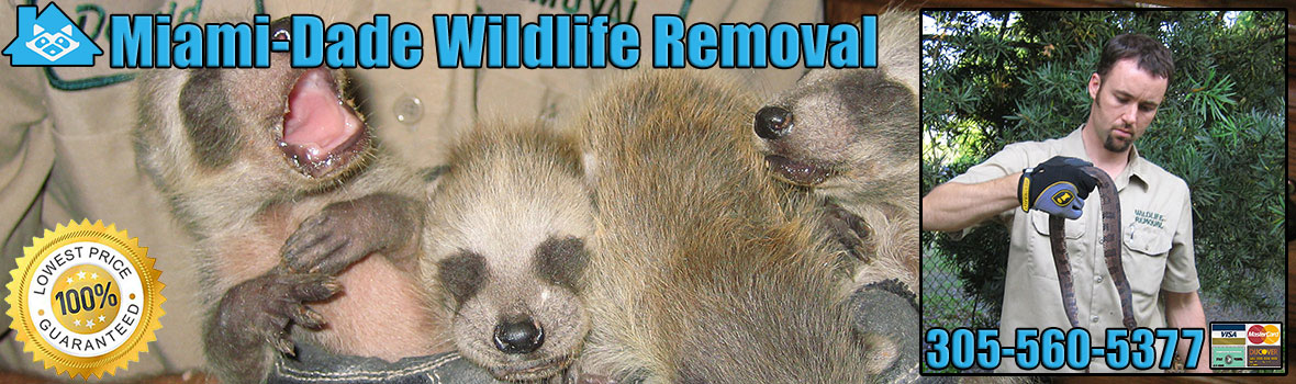 Miami-Dade County Wildlife and Animal Removal